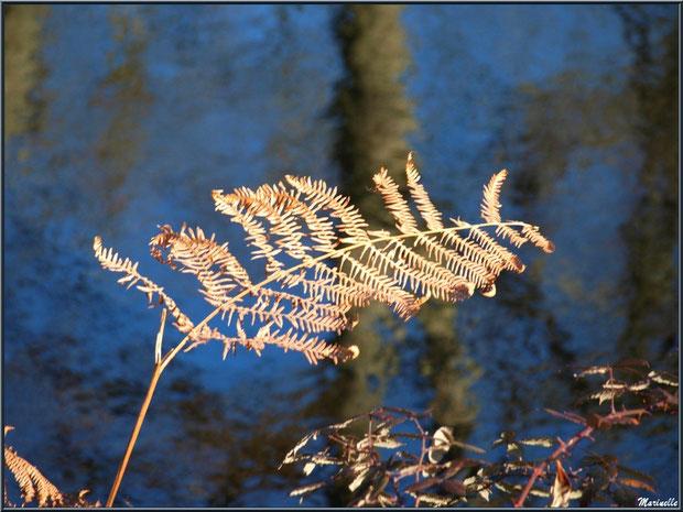 Fougère hivernale, roncier et reflets sur le Canal des Landes au Parc de la Chêneraie à Gujan-Mestras (Bassin d'Arcachon)