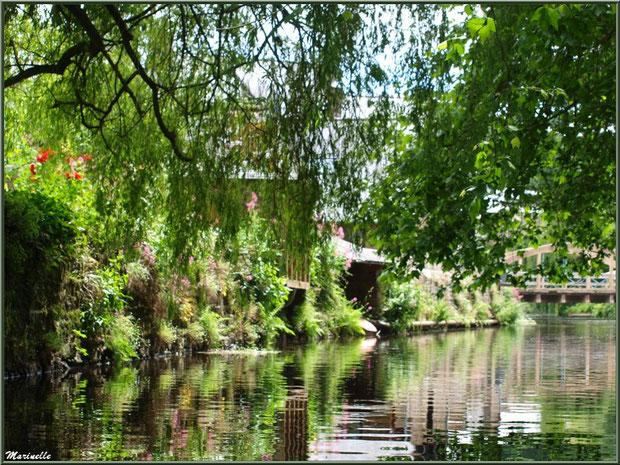Végétation luxuriante en bordure du Trieux et, en fond, le Pont St Yves, Pontrieux, Côte d'Armor (22)