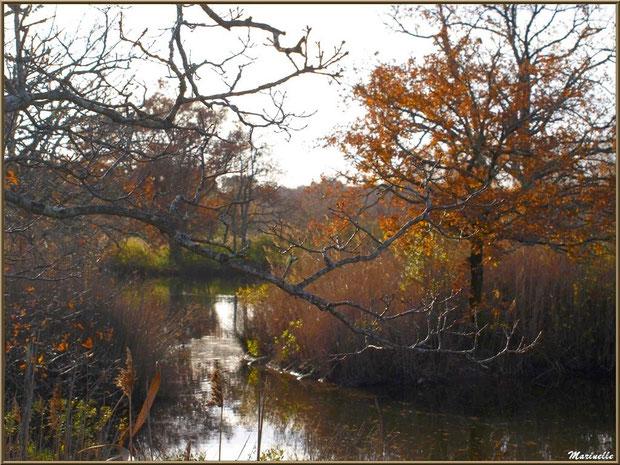 Reflets hivernaux dans un réservoir, Sentier du Littoral, secteur Port du Teich en longeant La Leyre, Le Teich, Bassin d'Arcachon (33)
