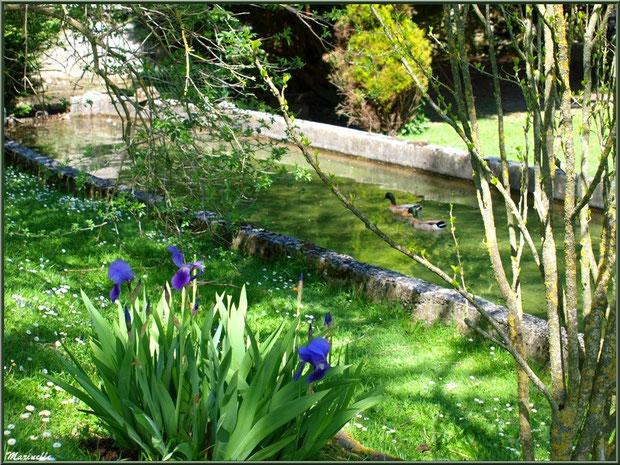 Iris en fleurs et canards au fil de l'eau à la Pisciculture des Sources à Laruns, Vallée d'Ossau (64)
