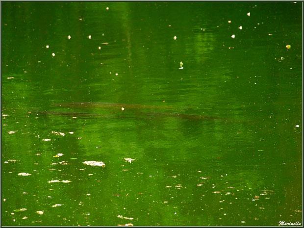 Le Grand Etang et ses énormes poissons - Les Jardins du Kerdalo à Trédarzec, Côtes d'Armor (22)