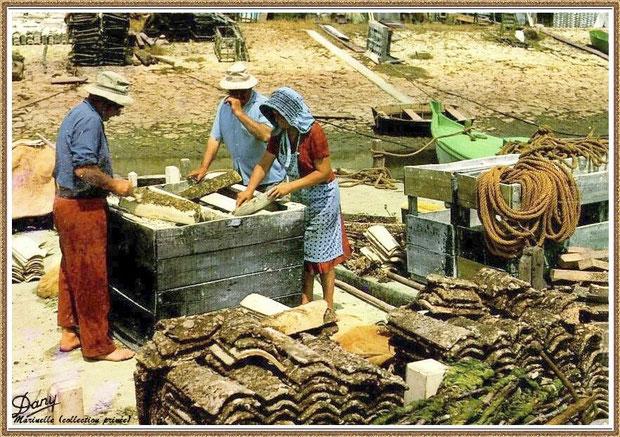 Gujan-Mestras autrefois : Détrocage des tuiles, Bassin d'Arcachon (carte postale, collection privée)