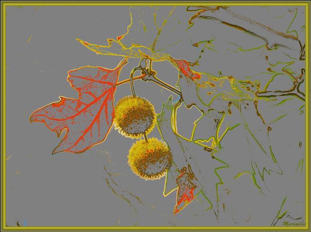 Branche de platane automnal avec bogues