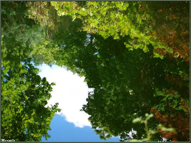 Reflets de la végétation sur le Petit Etang au bas de la Cascade - Les Jardins du Kerdalo à Trédarzec, Côtes d'Armor (22)