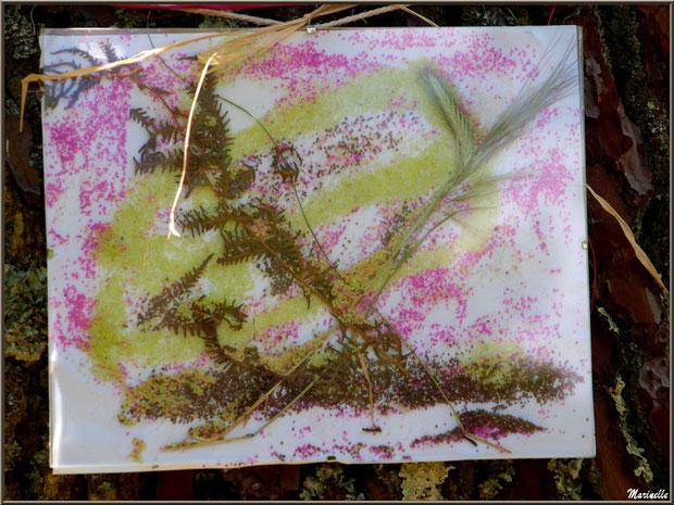 Tableau Nature sur un pin à la Fête de la Nature 2013 au Parc de la Chêneraie à Gujan-Mestras (Bassin d'Arcachon)