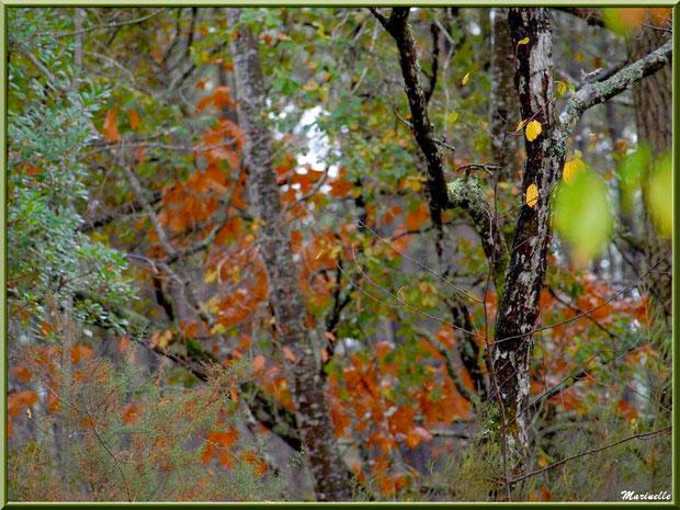 Méli mélo forestier automnal en forêt sur le Bassin d'Arcachon (33)