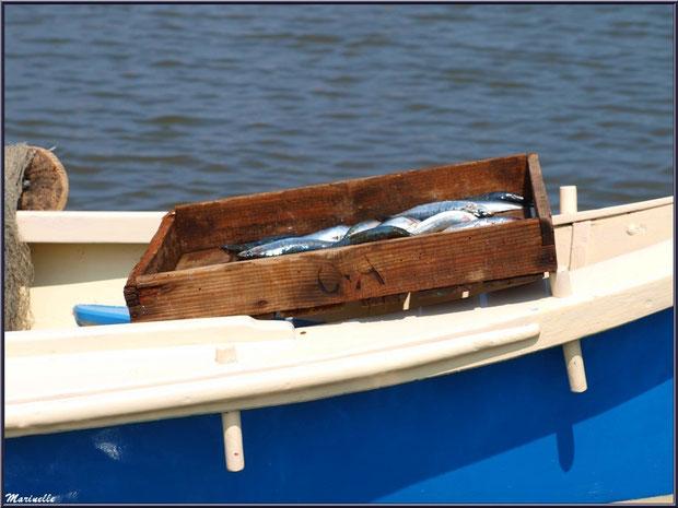 Cagette de sardines prête à être déchargée - Fête du Retour de la Pêche à la Sardine 2014 à Gujan-Mestras, Bassin d'Arcachon (33)