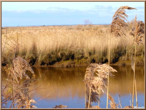 Roseaux et reflets sur La Leyre, Sentier du Littoral, secteur Port du Teich en longeant La Leyre, Le Teich, Bassin d'Arcachon (33)