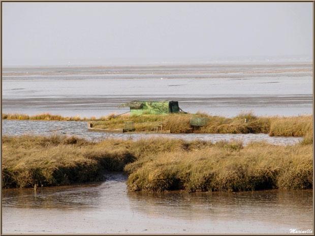 Tonne pour la chasse avec leur lac à tonne, côté Bassin sur le Sentier du Littoral, secteur Moulin de Cantarrane, Bassin d'Arcachon