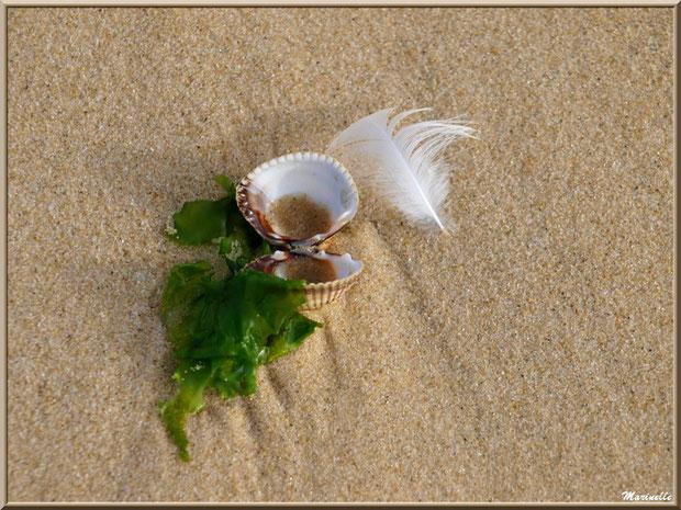 Oeuvre de Dame Nature sur la plage de Péreire à Arcachon (Bassin d'Arcachon)