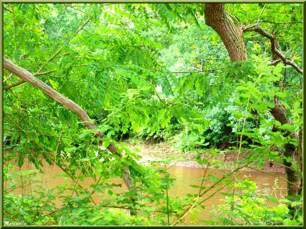 Végétation luxuriante en bordure de La Leyre, Sentier du Littoral au lieu-dit Lamothe, Le Teich, Bassin d'Arcachon (33)