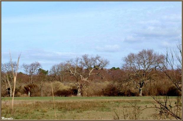 Végétation dans les pâturages, Sentier du Littoral secteur Pont Neuf, Le Teich, Bassin d'Arcachon (33)