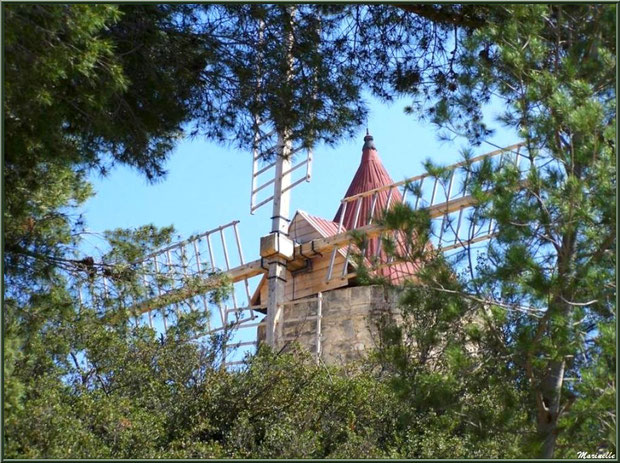 Le Moulin de Daudet à travers les pins à Fontvielle dans les Alpilles (Bouches du Rhône)