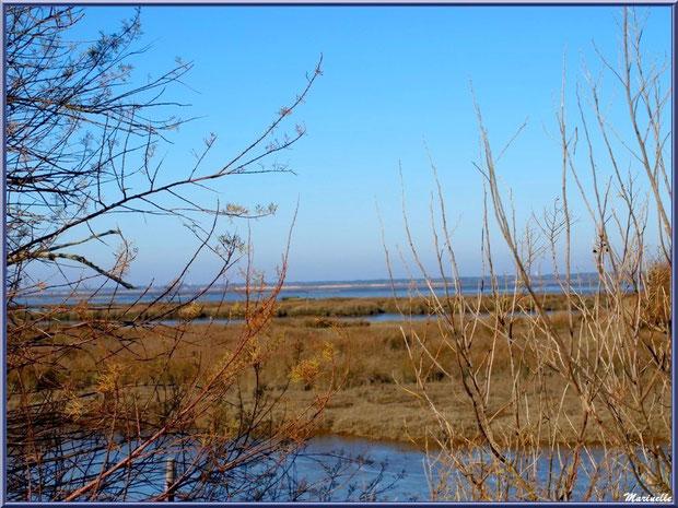 En hiver, derrière les tamaris, les marais et le Bassin, Sentier du Littoral côté Bassin, secteur Moulin de Cantarrane, Bassin d'Arcachon