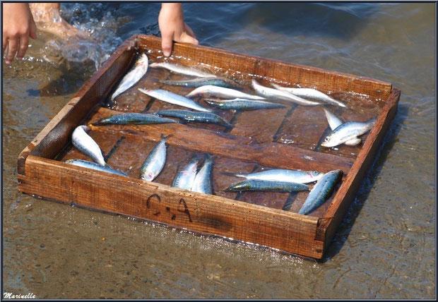 Lavage des cagettes de sardines après déchargement - Fête du Retour de la Pêche à la Sardine 2014 à Gujan-Mestras, Bassin d'Arcachon (33)