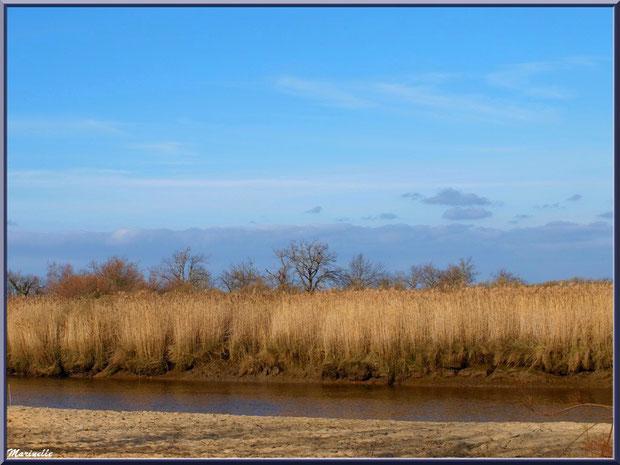Et coule La Leyre, Sentier du Littoral, secteur Port du Teich en longeant La Leyre, Le Teich, Bassin d'Arcachon (33)