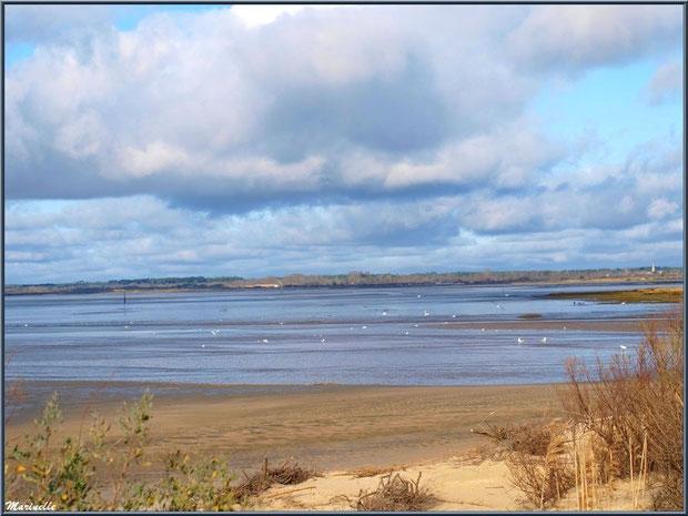 La plage hivernale et le ballet des mouettes sur le Bassin, Sentier du Littoral, secteur Moulin de Cantarrane, Bassin d'Arcachon