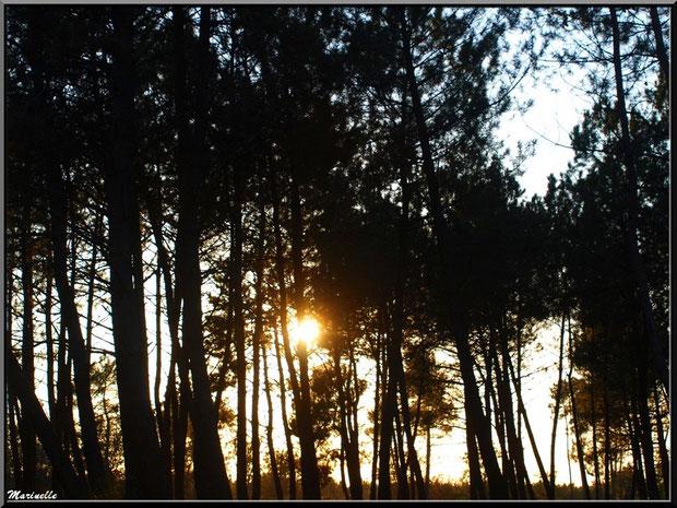 Coucher de soleil en forêt sur le Bassin d'Arcachon (33)