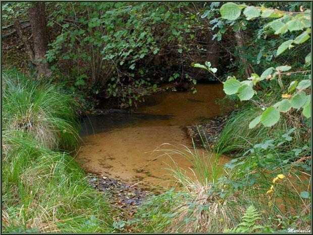 Ruisseau en contrebas de la fontaine Saint Clair à Mons, Belin-Beliet (Gironde)