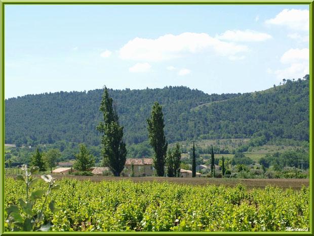 Mas, cyprès et vignoble dans la campagne environnante du village de Cucuron, Lubéron (84)