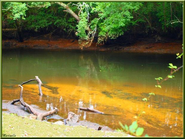 Bois et reflets en bordure de La Leyre, Sentier du Littoral au lieu-dit Lamothe, Le Teich, Bassin d'Arcachon (33)