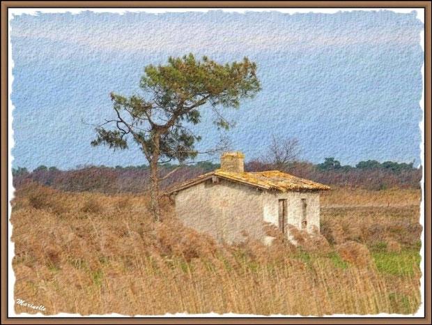Ancienne maison de gardien de chasse et pêche au milieu d'un marais, Sentier du Littoral, secteur Port du Teich en longeant La Leyre, Le Teich, Bassin d'Arcachon (33)