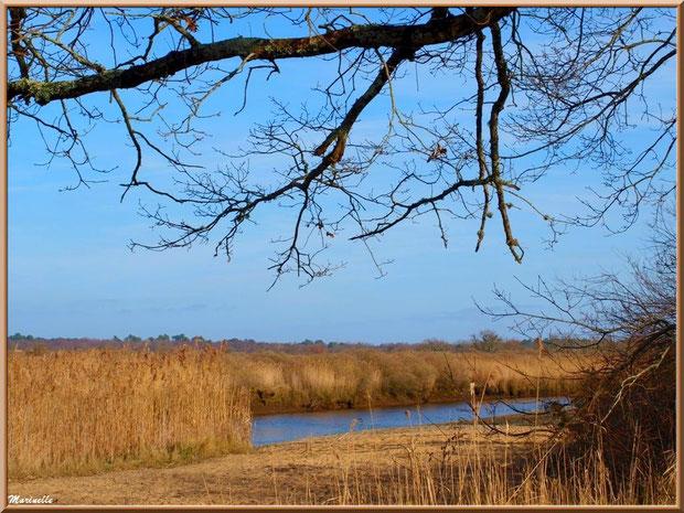 """La Leyre coule au milieu des roseaux et petite """"plage"""" en bordure, Sentier du Littoral, secteur Port du Teich en longeant La Leyre, Le Teich, Bassin d'Arcachon (33)"""