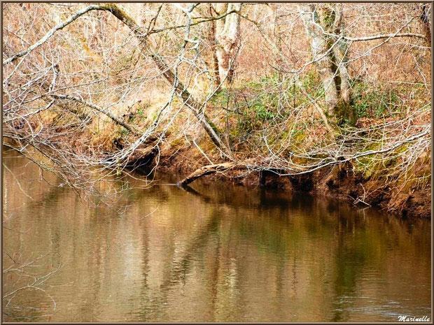 La Leyre, sa végétation et ses reflets en hiver, Sentier du Littoral au lieu-dit Lamothe, Le Teich, Bassin d'Arcachon (33)