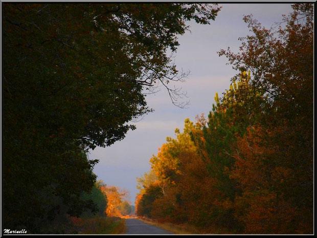 Soleil couchant en forêt automnale sur le Bassin d'Arcachon (33)