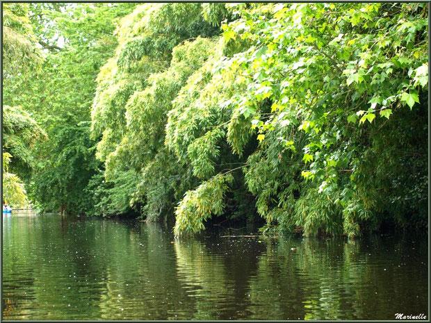 Les bambous dits chinois à proximité du Moulin de Richel sur Le Trieux, Pontrieux, Côte d'Armor (22)