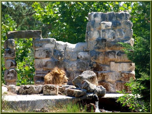 Lion, Zoo du Bassin d'Arcachon, La Teste de Buch (33)