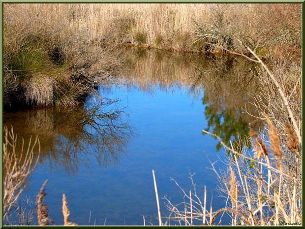 Reflets hivernaux dans un réservoir, Sentier du Littoral, secteur Moulin de Cantarrane, Bassin d'Arcachon