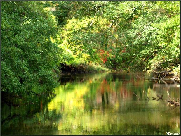 La Leyre et ses reflets en début d'automne , Sentier du Littoral au lieu-dit Lamothe, Le Teich, Bassin d'Arcachon (33)