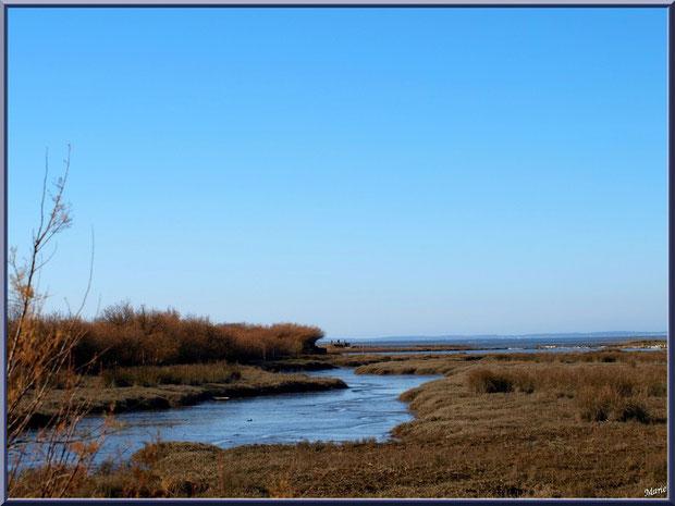 Prés salés, en hiver, en bordure du Bassin sur le Sentier du Littoral, secteur Moulin de Cantarrane, Bassin d'Arcachon