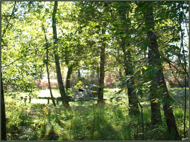 Derrière la forêt et son écrin de verdure, la Fontaine Saint Jean à Lamothe, Commune du Teich, Bassin d'Arcachon