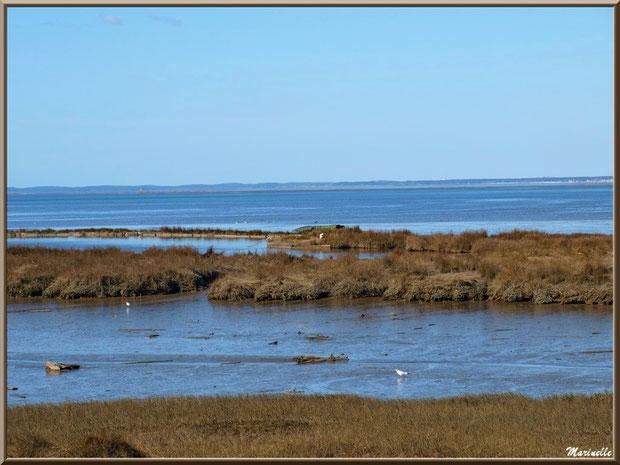 Marécage, tonne pour la chasse et lac à tonne, côté Bassin sur le Sentier du Littoral, secteur Moulin de Cantarrane, Bassin d'Arcachon