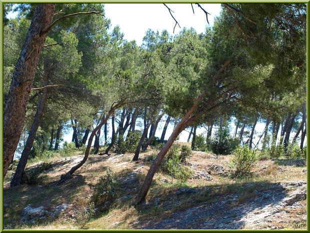 pinède La Montagnette Bouches du Rhône