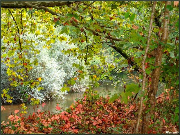Végétation automnale en bordure de La Leyre, Sentier du Littoral au lieu-dit Lamothe, Le Teich, Bassin d'Arcachon (33)