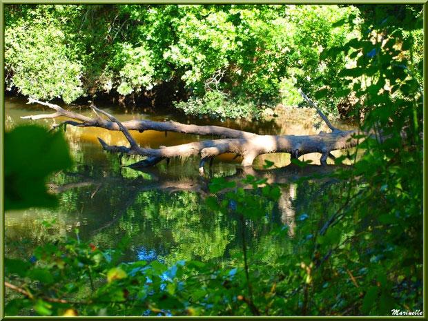 Verdoyance, bois et reflets en bordure de La Leyre, Sentier du Littoral au lieu-dit Lamothe, Le Teich, Bassin d'Arcachon (33)