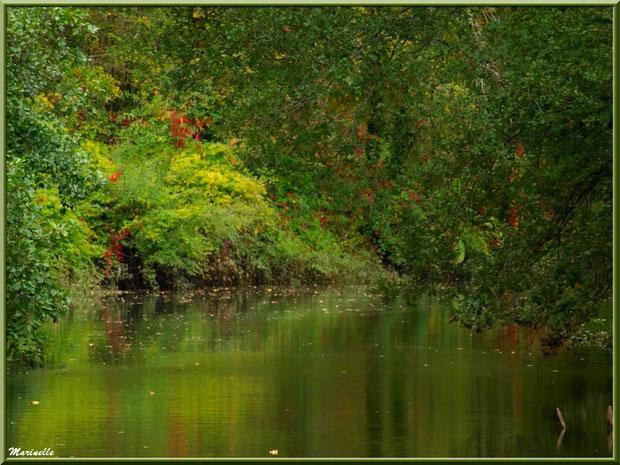 Reflets automnaux sur La Leyre, Sentier du Littoral au lieu-dit Lamothe, Le Teich, Bassin d'Arcachon (33)