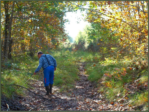 Un chercheur de champignons en forêt sur le Bassin d'Arcachon