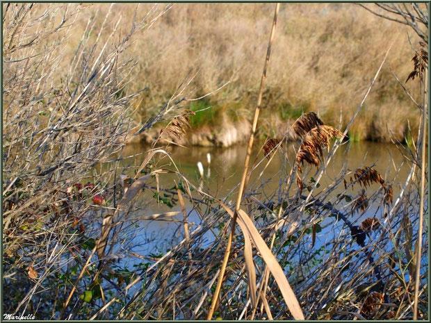Méli-mélo végétal hivernal en bordure d'un réservoir sur le Sentier du Littoral, secteur Moulin de Cantarrane, Bassin d'Arcachon