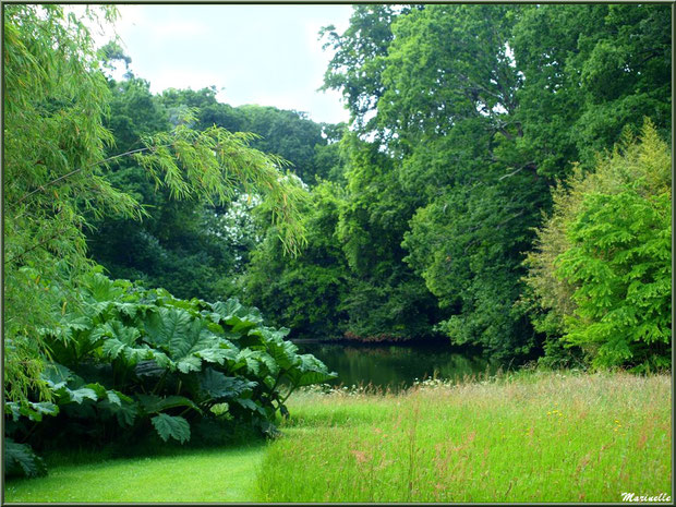 Le Grand Etang avec, à gauche, les Rhubarbes géantes du Brésil (Gunnera manicata) - Les Jardins du Kerdalo à Trédarzec, Côtes d'Armor (22)