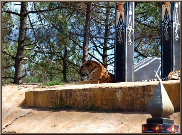 Tigre, Zoo du Bassin d'Arcachon, La Teste de Buch (33)