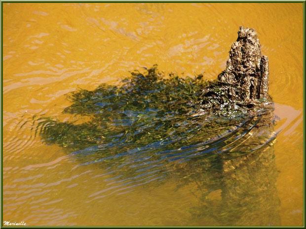 Bois et reflets sur La Leyre, Sentier du Littoral au lieu-dit Lamothe, Le Teich, Bassin d'Arcachon (33)
