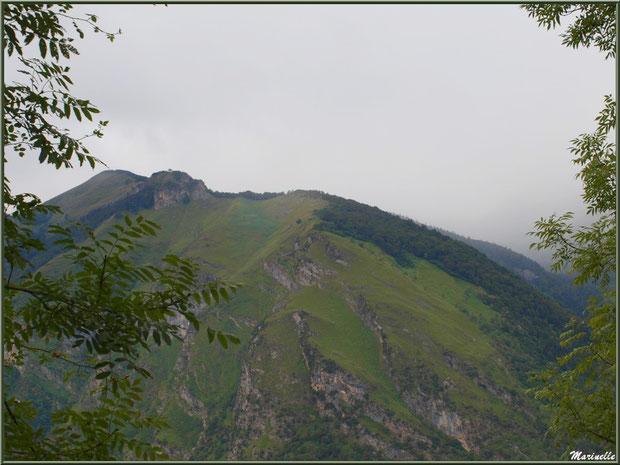 Panorama sur les Pyrénées, derrière les arbres, depuis les hauteurs du village d'Aas, Vallée d'Ossau (64)