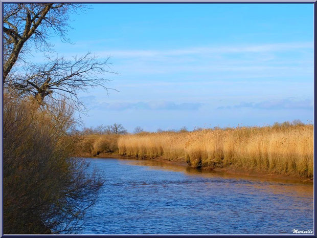 La Leyre et ses reflets sur le Sentier du Littoral, secteur Port du Teich en longeant La Leyre, Le Teich, Bassin d'Arcachon (33)