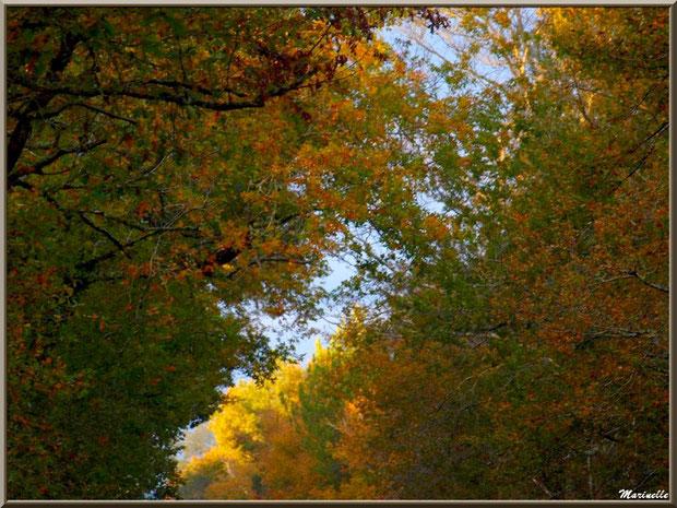 Symphonie automnale de chênes, forêt sur le Bassin d'Arcachon (33)