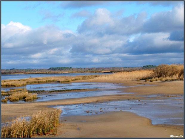 La plage avec ses oyats, roseaux et arbrisseaux, le Bassin, Sentier du Littoral, secteur Moulin de Cantarrane, Bassin d'Arcachon