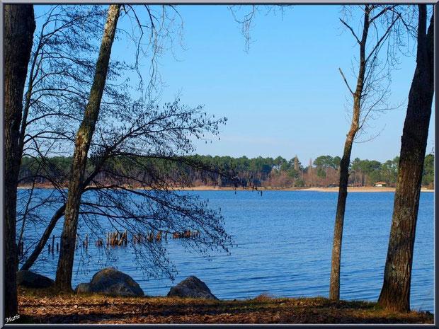 Le Lac de Sanguinet avec ses pins et aulnes en bordure, Landes